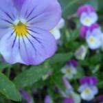 Success Story – Eliminating Guilt – Free Neville Goddard